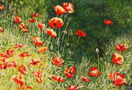 Poppies in the sun 2006